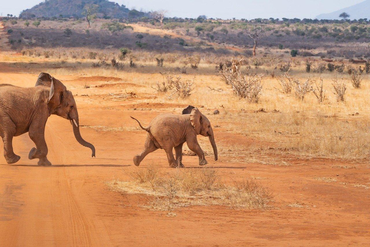 op safari met kinderen